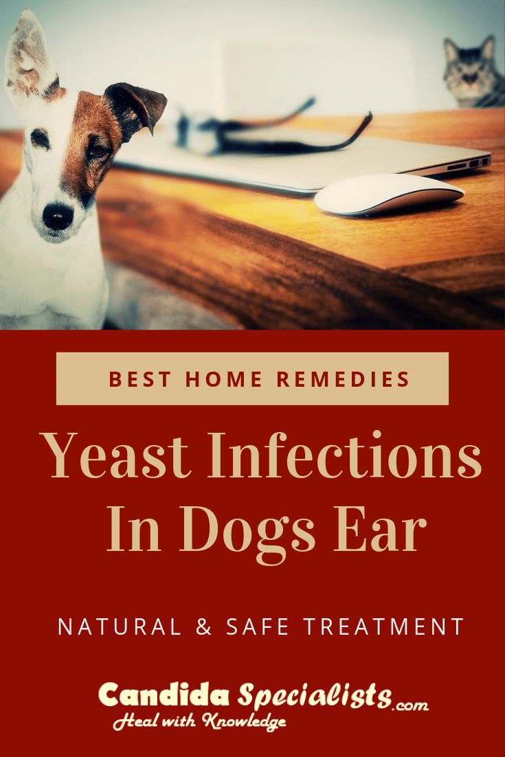 Yeast Infections In Dogs Ear