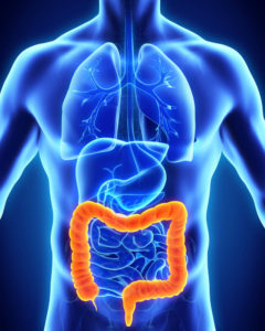 candida supplements gut health